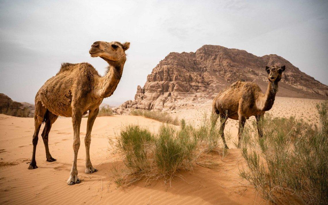 2018_Jordan_Wadi Rum 2_genevievehathaway-12