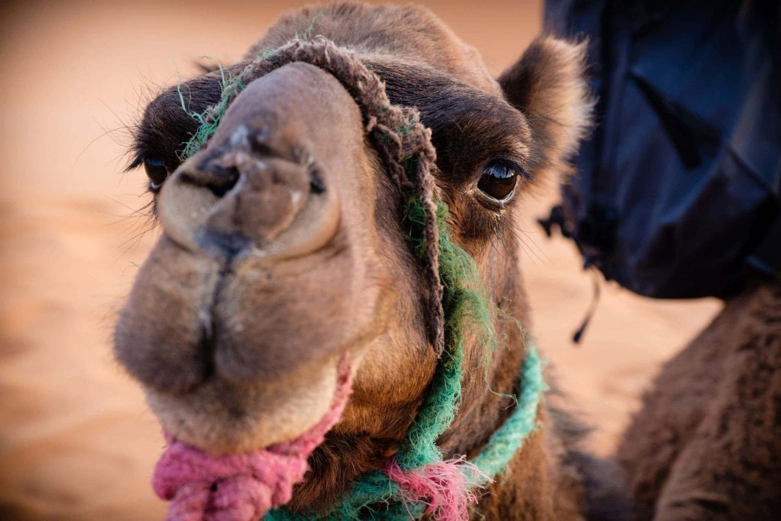 2017_Morocco_Sahara-desert_genevievehathaway_srgb-45-of-47