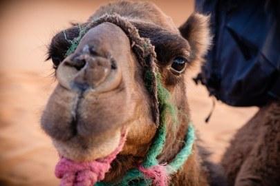 2017_Morocco_Sahara desert_genevievehathaway_srgb (45 of 47)