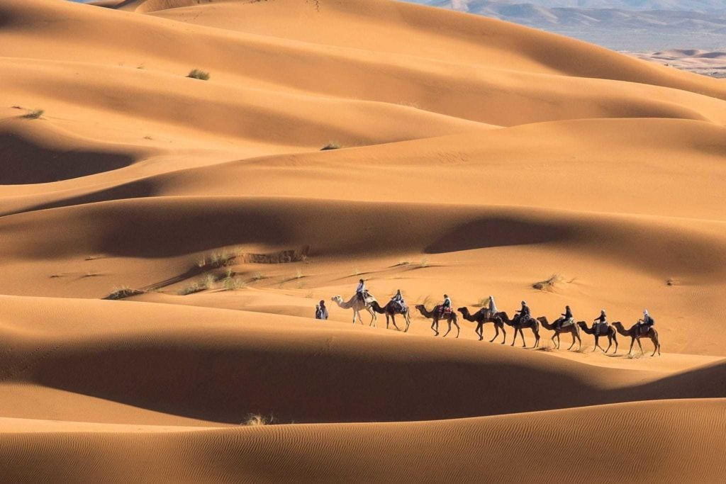 A camel train traveling in the Sahara during the solar eclipse.