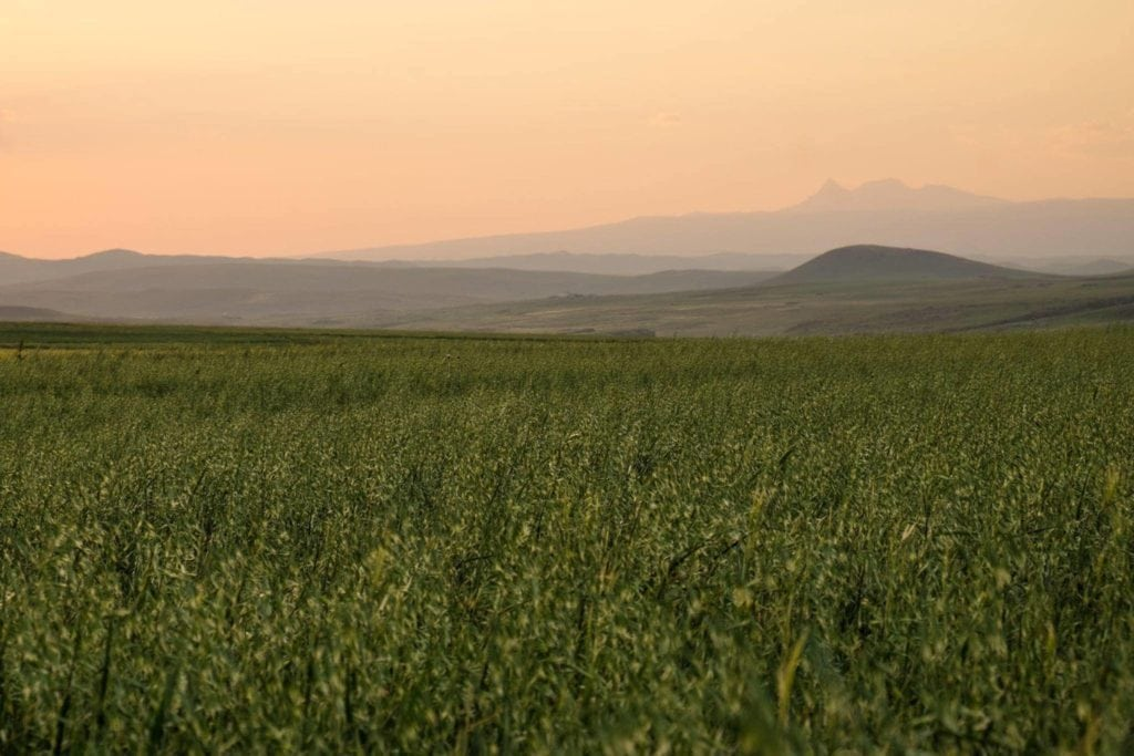 The high plains around Kars are often regarded as the breadbasket of Turkey, famed for its production of wheat, cheese and honey.
